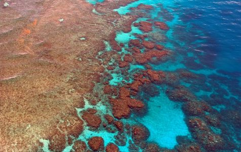 The end of the Great Barrier Reef